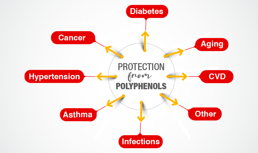 Protection-from-Polyphenols--